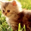 /~shared/avatars/14469421757191/avatar_1.img