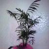 /~shared/avatars/50071623888592/avatar_1.img