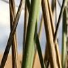 /~shared/avatars/60016494281682/avatar_1.img