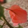 /~shared/avatars/61428032294661/avatar_1.img