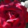 /~shared/avatars/65850919383692/avatar_1.img