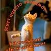 /~shared/avatars/8975667400241/avatar_1.img